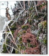 Exposed Roots I Acrylic Print