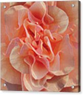 Expressionist Rose Acrylic Print