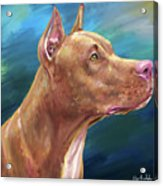 Expressive Painting Of A Red Nose Pit Bull On Blue Background Acrylic Print