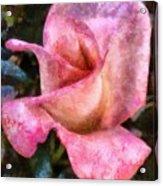 Exquisite Pink Acrylic Print