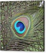 Eye  2 Acrylic Print