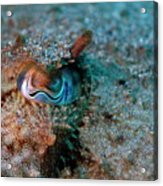 Eye Of A Common Cuttlefish Acrylic Print by Sami Sarkis