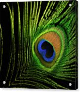 Eye Of A Peafowl Acrylic Print