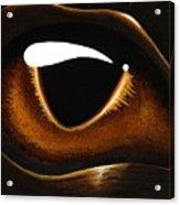 Eye Of Baby Bronze Acrylic Print
