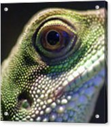 Eye Of Lizard Acrylic Print