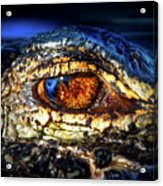 Eye Of The Apex Acrylic Print