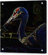 Eye Of The Crane Acrylic Print