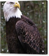 Eye Of The Eagle Acrylic Print