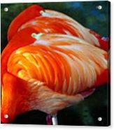 Eye Of The Flamingos Acrylic Print