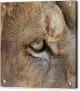 Eye Of The Lion #2 Acrylic Print