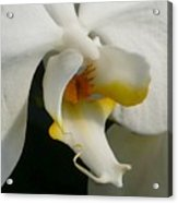 Eye Of The Orchid Acrylic Print
