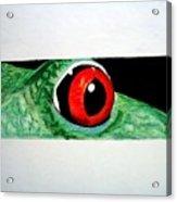 Eye Of The Red Eyed Tree Frog Acrylic Print