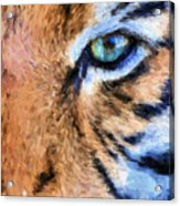 Eye Of The Tiger Acrylic Print by JC Findley