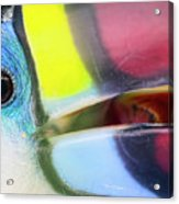 Eye Of The Toucan  Acrylic Print