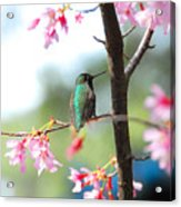 Eye On Spring Acrylic Print