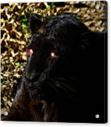 Eyes Of The Panther Acrylic Print