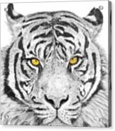 Eyes Of The Tiger Acrylic Print