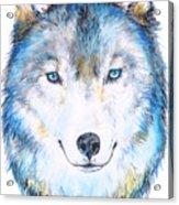 Eyes Of The Wild Acrylic Print