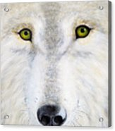 Eyes Of The Wolf Acrylic Print