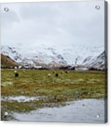 Eyjafjallajokull Iceland Acrylic Print