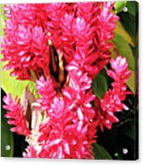 F10 Red Ginger Acrylic Print