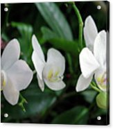 F11 Orchid Flowers Acrylic Print