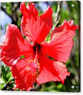 F20 Red Hibiscus Acrylic Print