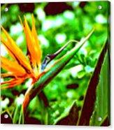 F21 Bird Of Paradise Flower Acrylic Print