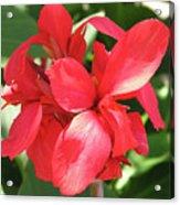 F22 Cannas Flower Acrylic Print