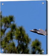 F22 Raptor Flying Low Acrylic Print