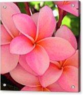 F23 Plumeria Frangipani Flowers Acrylic Print