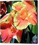 F24 Cannas Flower Acrylic Print