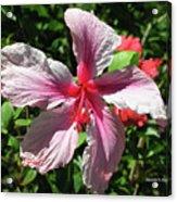 F5 Hibiscus Flower Hawaii Acrylic Print