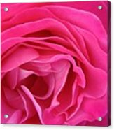 Fabric Of Rose Acrylic Print
