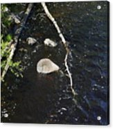 Face In The River Acrylic Print