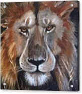 Face Of Majesty Acrylic Print
