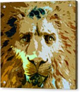 Face Of The Lion Acrylic Print