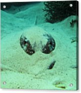 Face Off With Stingray Acrylic Print