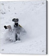 Face Plant In The Snow Acrylic Print