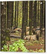Faces In The Woods Acrylic Print