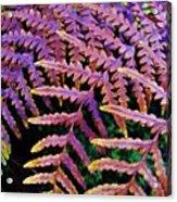 Faded Ferns Acrylic Print