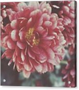Faded Florals Acrylic Print