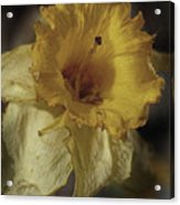 Faded Glory Acrylic Print