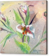 Faded Lilies Acrylic Print
