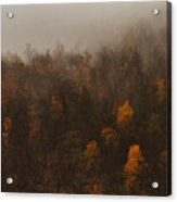 Fading Fall Colors I Acrylic Print