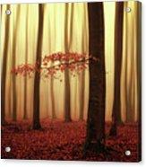 Fading Memories... Acrylic Print