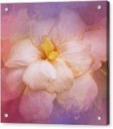Fading Summer Flower Acrylic Print