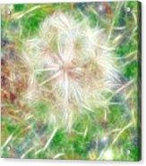 Faerie Fluff Acrylic Print