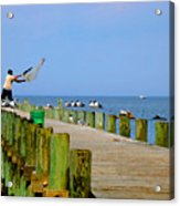 Fairhope Fisherman With Cast Net Acrylic Print