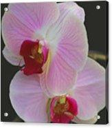 Fairy Blush Orchids Acrylic Print